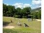 Greens van de Ibiza golf club